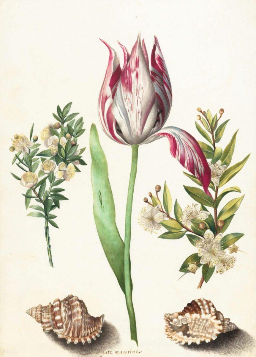 ボタニカルアート/botanical art