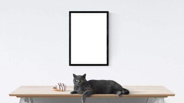 ミニマル 猫