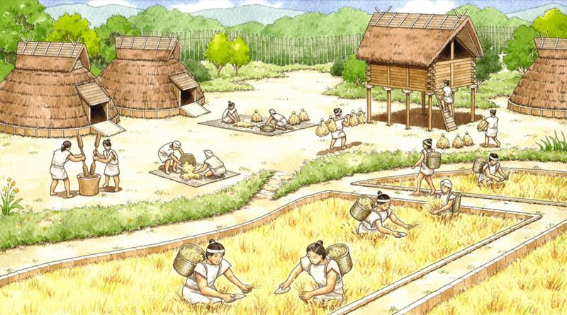 弥生時代 稲作