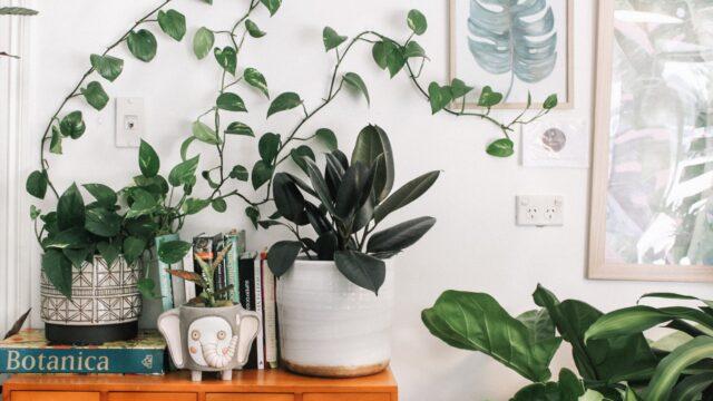 植物 ボタニカル グリーン